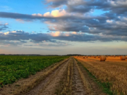 Oxford Business Report Reflects OCP's Commitment to Develop African Agriculture