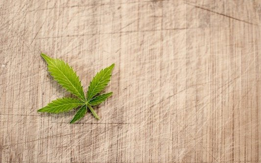 Scientific Body Forms in Tangier to Support Passing of Pro-Cannabis Law