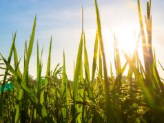 Water Management Drives OCP Group's Ambitious Sustainability Program