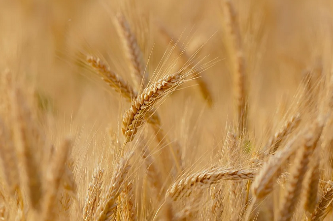 Morocco Launches Marketing Campaign for National Crop Production
