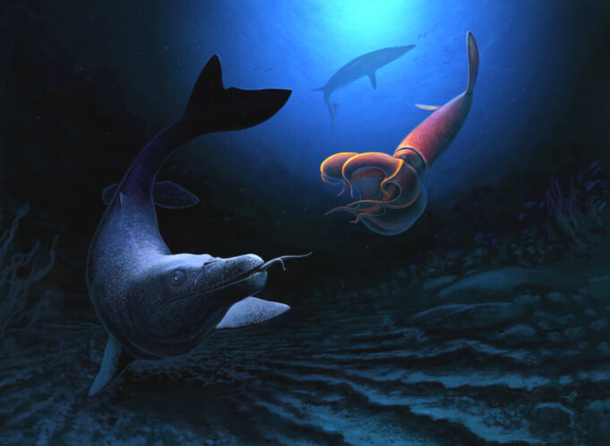 Scientists Discover 66 Million Year Old Marine Lizard in Morocco
